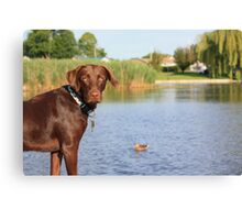 PLEEEEEEZE can I chase the duck? Canvas Print
