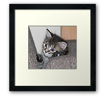 hello kitten Framed Print