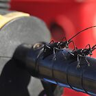 Two Bugs on my Four Wheeler by Donna Ridgway