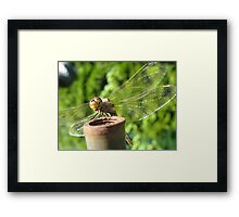 Hello Dragonfly Framed Print