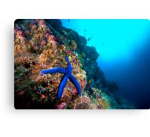 Wide Angle Starfish Canvas Print