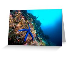 Quot Wide Angle Starfish Quot By Melissa Fiene Redbubble