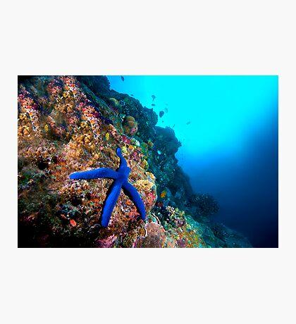 Wide Angle Starfish Photographic Print