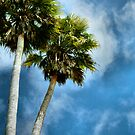 Palm Trees by brittany m. photography