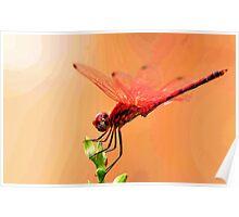Urpthemis assignate - RED BASKET ( The ballerina ) Poster