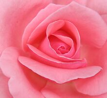 up close and pink by Ted Petrovits