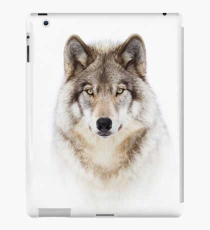 Portrait of a Wolf - Timber Wolf iPad Case/Skin