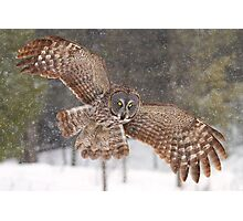 Awesome! - Great Grey Owl Photographic Print