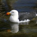 Pacific gull afloat by Christine Beswick