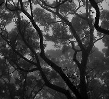Macedon Mist by salsbells69