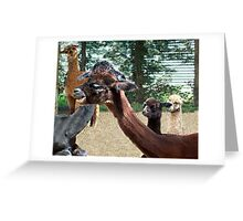 Where did she get her hair done! Greeting Card