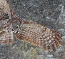 Through the Snow - Great Grey Owl Sticker