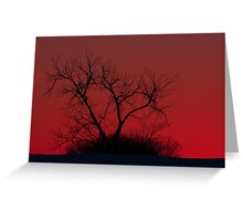 Red sky at night - Bare Tree Greeting Card