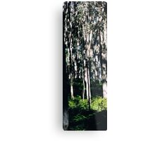 Stanley Forest Metal Print