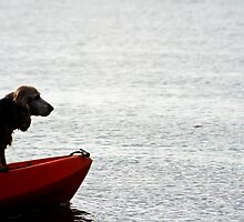 Cocker Spaniel on Kayak by taytehampton