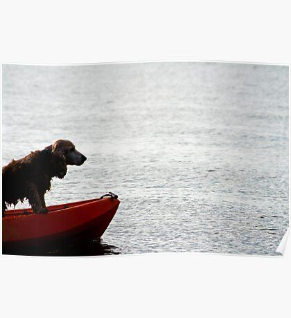 Cocker Spaniel on Kayak Poster