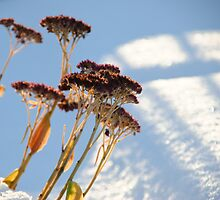 Winter Flowers by Katherine Maidle