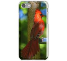 Cardinalis Cardinalis - Northern Cardinal | Center Moriches, New York  iPhone Case/Skin