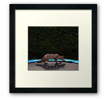 Sly ........ Framed Print