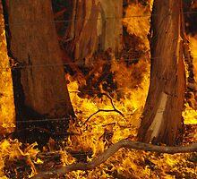 Trees On Fire by Luke Commisso