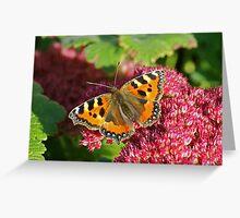 Small Tortoiseshell Butterfly on Sedum. Greeting Card