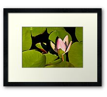 Water Lily III   / Framed Print