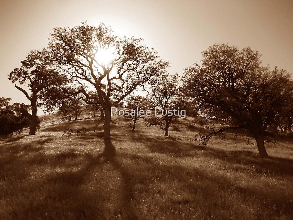 Graveyard of Trees by Rosalee Lustig