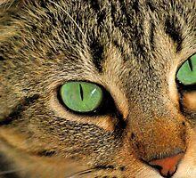Green Eyed Lady by kelseycowin