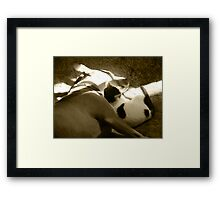 The Pittie and the Kittie Framed Print