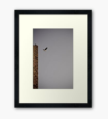 no nestlings. Framed Print