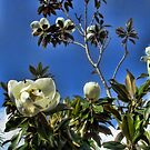 Bees in the Magnolias by GolemAura