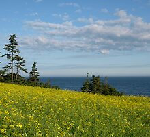 Yellow Flowers By The Sea by marchello