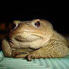 A Common Toad With Philosophical Disposition by taiche