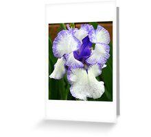 Lavender Blue Iris Greeting Card