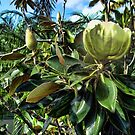 Magnolia Profile by GolemAura