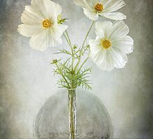 Cosmos Cheer by Mandy Disher