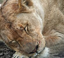 SLEEPING LIONESS by Rebecca Conroy