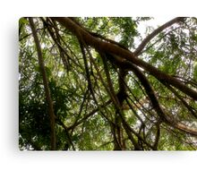 Branches and Foliage Frame the Sky  Canvas Print