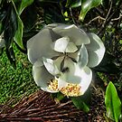 The Bee Nibbling the Magnolia's Stamens Two by GolemAura
