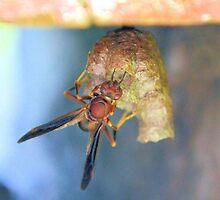 Wasp by ©Dawne M. Dunton