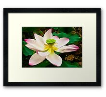 Water Lily VI    / Framed Print