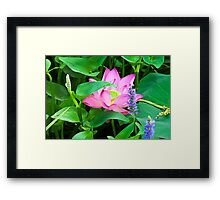 Water Lily VIII    / Framed Print