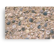 Seashell City Canvas Print