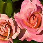 Rose Series I  / by Shelley  Stockton Wynn