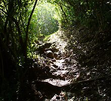 Trail of Light by contentsxplicit