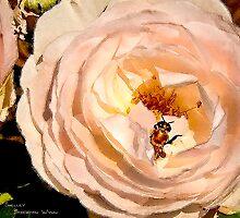 Rose Series III    / by Shelley  Stockton Wynn
