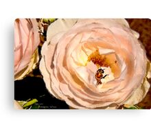 Rose Series III    / Canvas Print