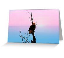 Bald Eagle Sky High Greeting Card