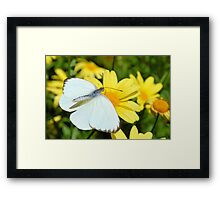 The Cabbage White Butterfly Framed Print