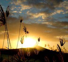 Delicate Grass by Mark Elshout